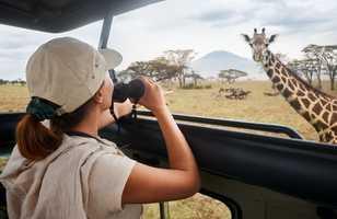 Safari dans le parc national Serengeti