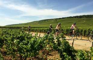 Cyclistes dans les vignes en bourgogne sud
