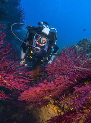 Plongeuse entourée de gorgones - Mèdes, Porquerolles