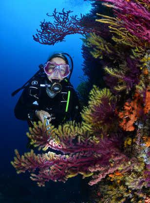 Plongeuse souriante au milieu des gorgones violettes