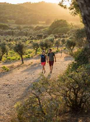 Randonneurs dans les champs d'oliviers