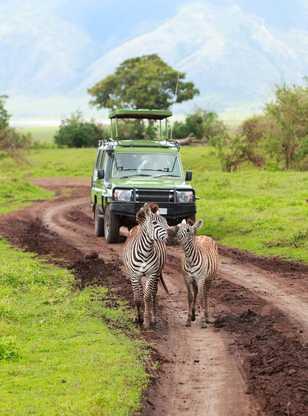 Rencontre avec des zèbres en safari