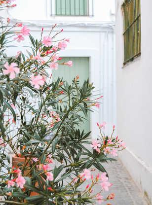 Rue fleurie typique de Tarifa