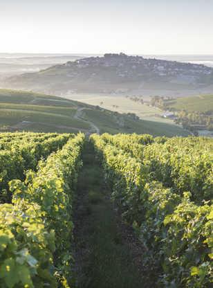 Vignobles entourant le village de Sancerre