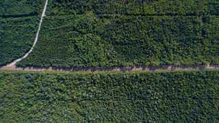 Forêts du Canada