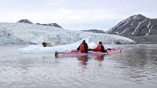 Kayak et phoque en Arctique