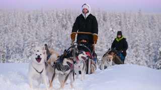 Chien de traineau sur les hauteurs du parc d'Hossa, Finlande