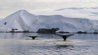 Photo d'un baleine en antarctique