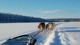 Voyage en chien de traineau
