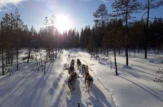 Découverte chien de traineau en Finlande, Laponie
