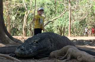 Dragon du Komodo en Indonésie