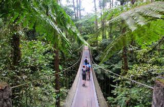 Pont suspendu dans la forêt pluviale du Costa Rica