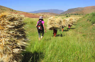 Ramassage aux champs, Vallée du Zat, Maroc