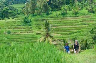 Randonée, rizière, Bali