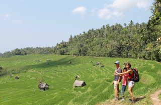 Indonésie, Belimbing, Rizières
