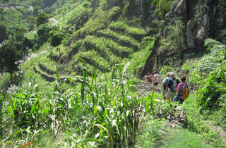 Randonnée entre les terrasses façonnées de Santo Antao