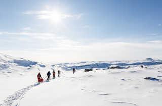 Randonnée raquettes et pulka au Groenland