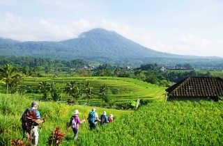 Randonneurs dans les rizières de Jatiluwih, Bali, Indonésie
