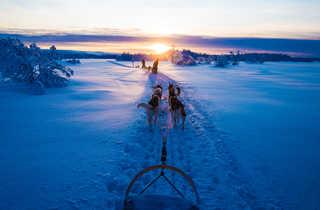Voyage en Laponie l'hiver en chien de traineau