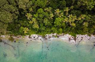 jungle, baignade, ocean, caraibes, costa rica
