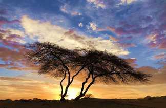 Acacia au coucher, Mauritanie