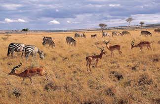 Animaux dans la savane en Tanzanie