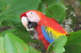ornithologie, faune, observation, oiseaux costa rica