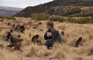 Babouin Gelada dans le massif du Simien en Ethiopie