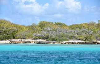 Balade dans la Mangrove en Guadeloupe