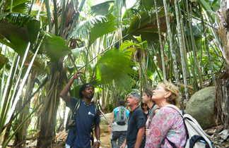 Balade dans la Vallée de Mai aux Seychelles