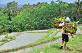 randonnée, rizière, Bali