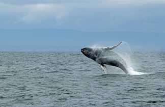 Photo d'une baleine