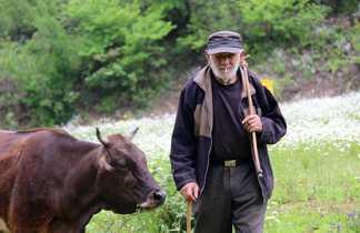 Berger et sa vache