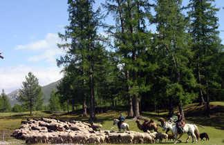 Bergers regroupant le troupeau de moutons à cheval