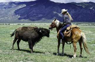 Cavalière et bison, Zapata Ranch, Colorado