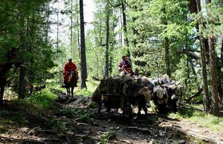 cavaliers et yacks de bâts, Naiman Nuur