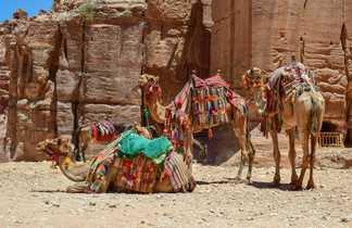 Chameaux dans le désert du Wadi Rum en Jordanie