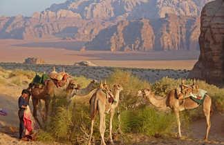 chameaux désert wadi rum
