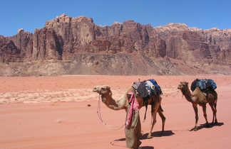 Chamelier dans le désert du Wadi Rum en Jordanie
