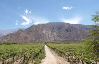 Champ de vignes dans les environs de Cafayate en Argentine