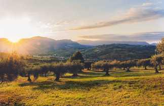 Champs d'oliviers près du village de Vrisses dans l'Ouest de la Crète