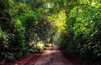 Chemin en terre rouge au millieu du vert de la forêt du parc national Iguazu, entre Brésil et Argentine