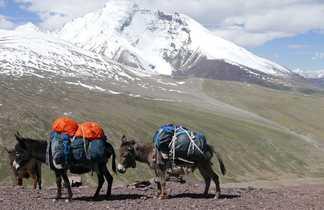 Col de Kongmaru La avec des ânes au Ladakh