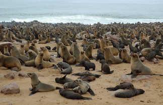 Colonie d'otaries de Cap Cross sur les bords de l'Atlantique en Namibie