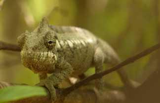 Couleurs caméléon à Madagascar