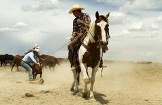 Cow boy Zapata ranch Colorado