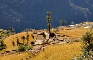Cultures en terrasses, sur le chemin du Sanctuaire des Annapurnas