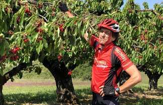 Cycliste dans les cerises vers Auxerre