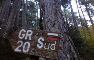 Dans la forêt de Vizzavona, sur le GR20