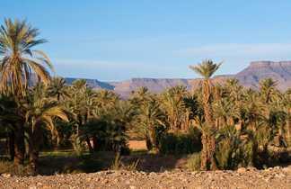 Désert palmeraie au Maroc